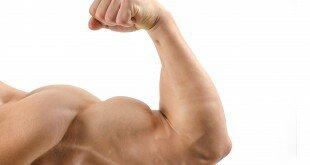 Muscle de chez Wozata